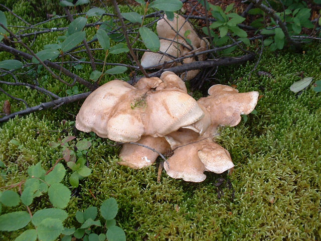 Wild mushrooms of all kinds.